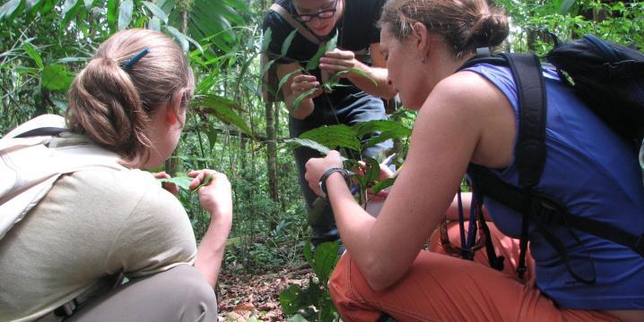 People participating in fieldwork.